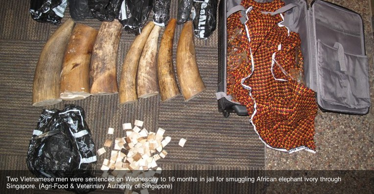 EAL - Arrest in Vietnam for Ivory - complex smuggling routes