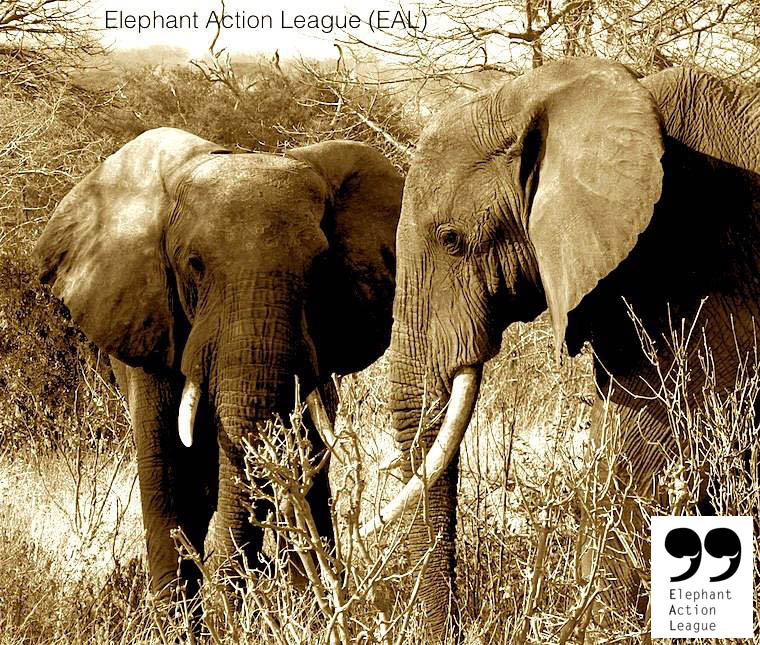 Elephant Action League - African elephants in art