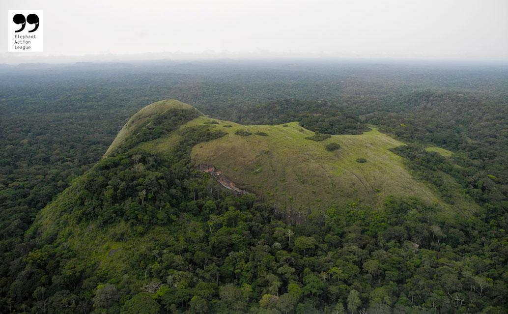 Elephant Action League - The Gabon Jungle - Ph Credit: Elephant Action League