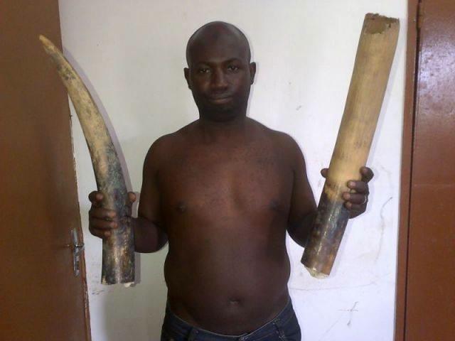 Ivory dealer arrested in Gabon - he risks only 6 months jail