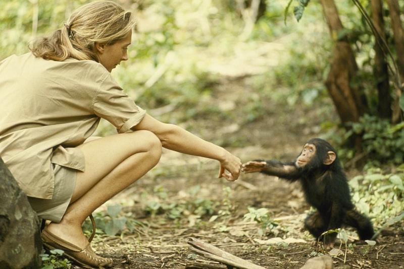 Jane Goodall 1 small