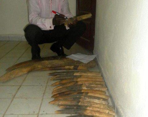 Elephant Advocacy League - LAGA facilitates arrest of poachers