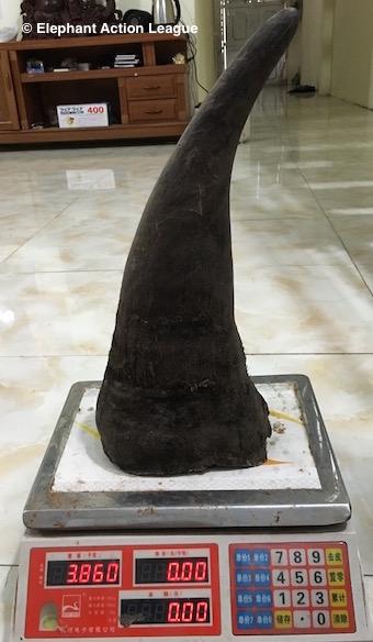 Rhino horn 05 - EAL