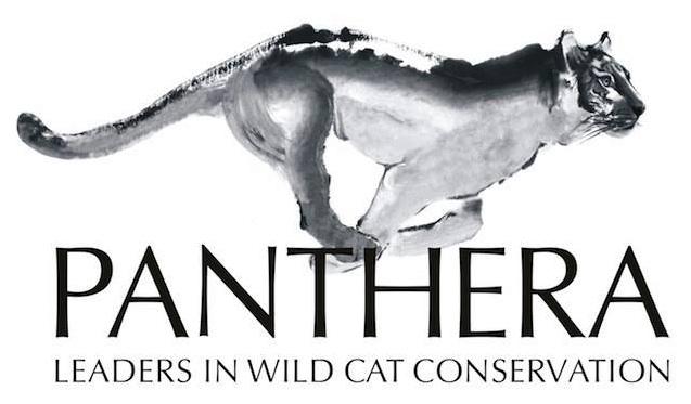 WildLeaks - Panthera partnership